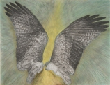 Eternal light 75×95cm Silver pencil, Pencil, Colour pencil (Actual size of wings)