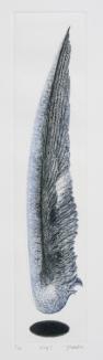 Wing・Ⅰ _2005 39,5×8cm