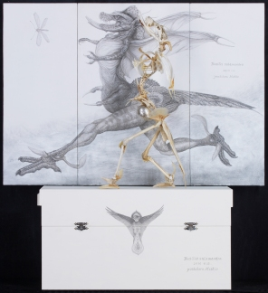 Basilis Salamandra_2010